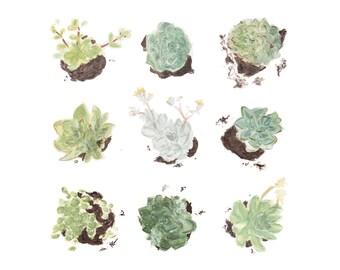 Succulents Print Botanical Print   jungalow wall art of a watercolor succulent painting