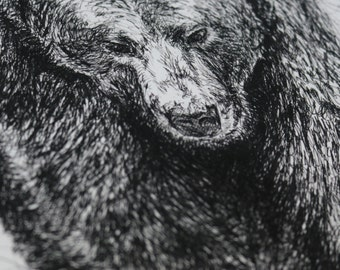 Grizzly Bear A3 Pen and Ink Illustration Print Limited Edition