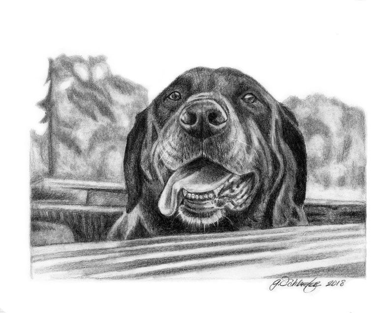 Pet Portrait Custom Dog Portrait Graphite Pencil 8x10 Sketch from Your Photos