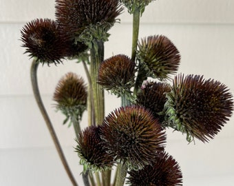 From the Farm - 12 dried coneflower stems - autumn inspired - wreath making - crafts - dried flowers