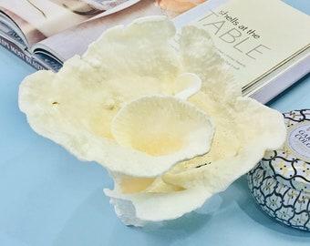 Beach Decor - Large Natural Cup Coral - #6 Coastal Decor 35th Anniversary Gift Sea Shells Seashells