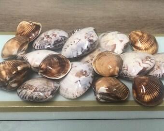 Wampum Quahog Clam Shell Jewelrygrade Purple Quahog EACH Half Shells Rare