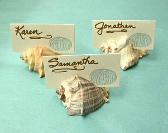 100 Seashell Place Card Holders - Beach Weddings, Beach Showers, Beach Dinners sea shells