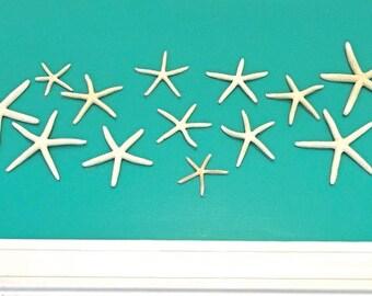 """Beach Decor - Wall Mounted Natural Starfish - Set of 11 - 3""""-5"""" Ready to Hang"""