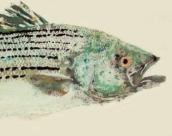 Striped Bass - Gyotaku Fish Rubbing - Limited Edition Print (25.25 x 11)