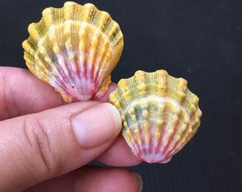 XL Loose Sunrise Shell SET (NOT matching size), Hawaiian Sunrise Shell, Hawaiian Sunnie, Moonrise Shell, Sea Shell, Aloha, Hawaii Shell