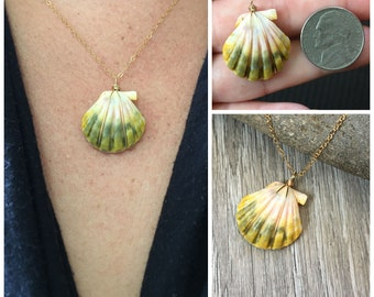 Sunrise Shell Necklace (Nickel size), Gold Fill Necklace, Sunrise Shell Jewelry, Hawaii, Hawaiian Jewelry, Sea Shell, Simply Sparkle Designs