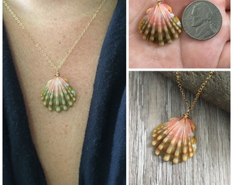 Sunrise Shell Necklace (Nickel size), Gold Fill Necklace, Sunrise Shell Jewelry, Hawaii, Hawaiian Jewelry, Sea Shell, Simply Sparkle Design