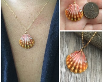 Sunrise Shell Necklace (Penny size), Gold Fill Necklace, Sunrise Shell Jewelry, Hawaii, Hawaiian Jewelry, Sea Shell, Simply Sparkle Designs