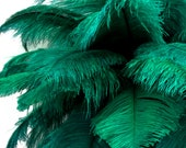 Ostrich Feathers, 10 Pieces - 6-8 quot Peacock Green Ostrich Dyed Drabs Body Plumage Feathers Craft Supplier 1377