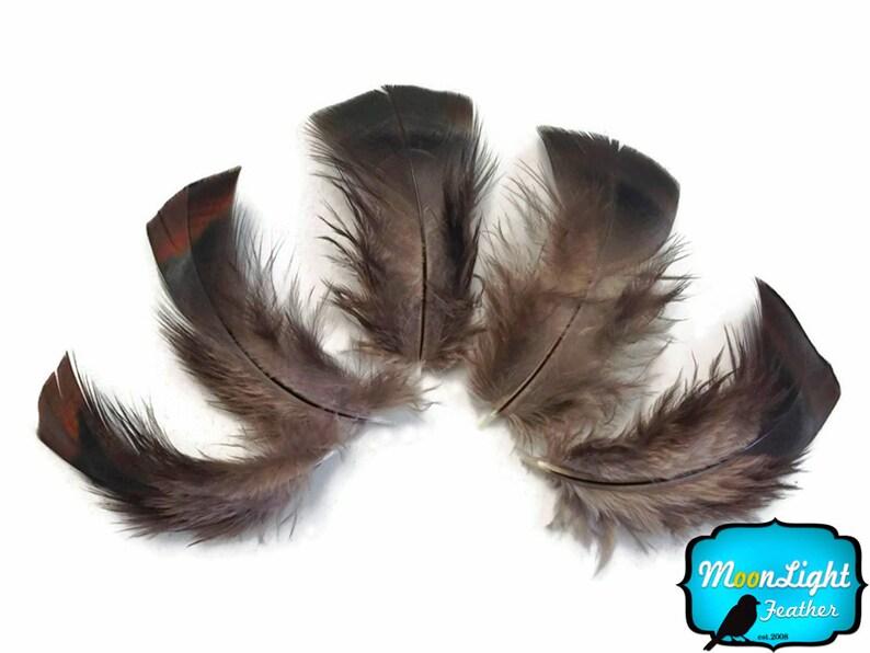 1 Pack Black Bronze Wild Turkey T-Base Plumage Feathers 0.20 oz Wild Feathers : 3258