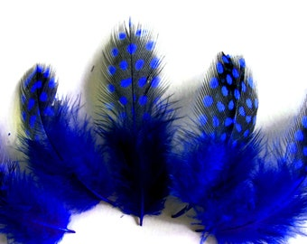 Polka Dot Feathers, 1 Pack - Royal Blue Guinea Hen Polka Dot Plumage Feathers 0.10 Oz. Craft Supply : 3793