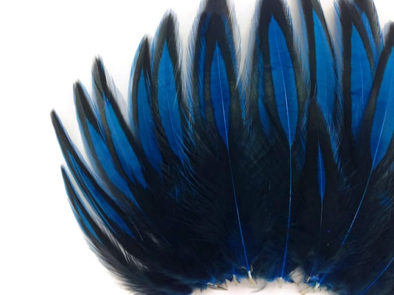 fly tying BLW Kingfisher Bleu Whiting American Hen Cape