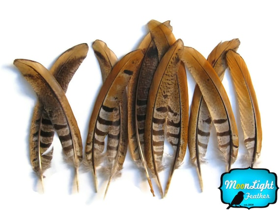 """6-8/"""" Natural Reeves Venery Tail Feathers Pheasant Feathers 10 Pieces"""