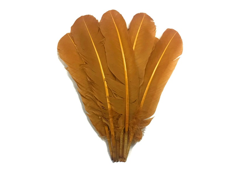 Light Brown Turkey Rounds Secondary Large Wing Quill Feathers Craft Supply Quill Feathers 6 Pieces 4185