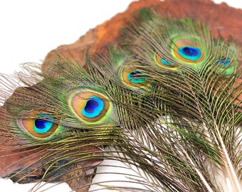 """USA Peacock Feathers, 10 Pieces - 6-8"""" Small Eye Natural Iridescent Green Peacock Tail Feathers : 353"""