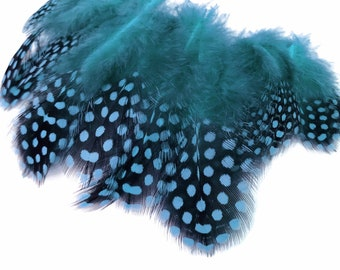 Polka Dot Feathers, 1 Pack - Turquoise Blue Guinea Hen Polka Dot Plumage Feathers 0.10 Oz. Craft Supply. : 2024