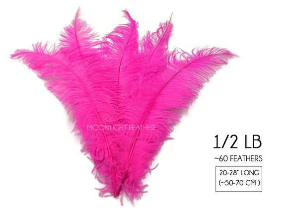 Approx 20-28 cm long Pack of 5 Rooster Tail  Feathers