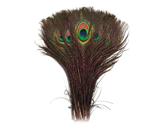 Bulk 10-12 inch UK Stock Peacock Eyes Feathers
