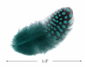 Polka Dot Feathers, 1 Pack - Peacock Blue Guinea Hen Polka Dot Plumage Feathers 0.10 Oz. Craft Supply : 4023