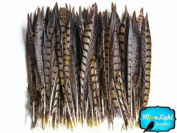 Plumes de faisan, 50 pièces - 10-12