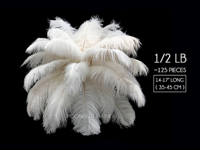 "Ostrich Feathers, 1/2 lb - 14-17"" Off White Ostrich Large Drab Wholesale Feathers (bulk) : 2053-D"