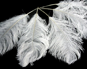 """Ostrich Feathers, 10 Pieces - 12-16"""" White Ostrich Tail Centerpiece Costume Feathers : 1414"""