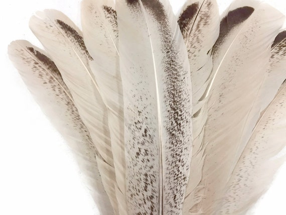 6 pieces-Rouge /& Noir Deux Tons Turquie Rond Tom aile secondaire plume Plumes