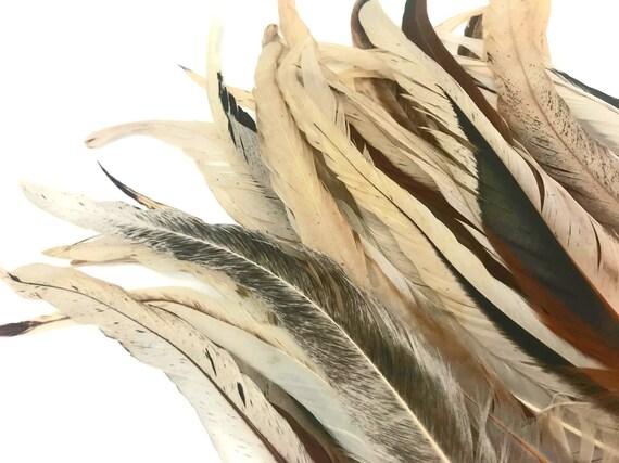 BULK 50pcs Brown Tan Rooster Feathers 10-15cm DIY Millinery DIY Craft Juju Hat