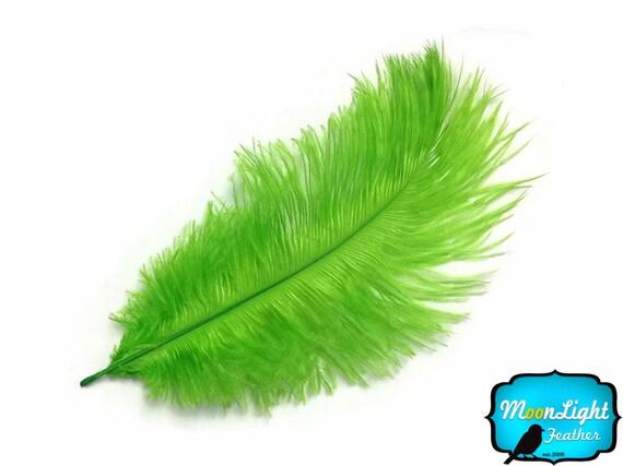 Plumes d'autruche, 100 pièces - 6-8» 6-8» - anis vert gros compte-gouttes de plumes d'autruche (en vrac): 1446 26fbef