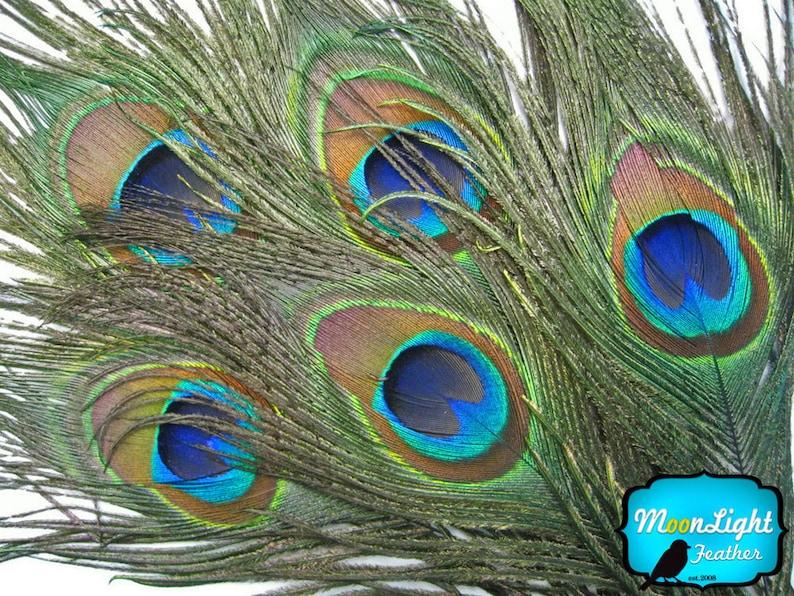 USA Natural Peacock Feathers 10 Pieces  BIG NATURAL Peacock image 0