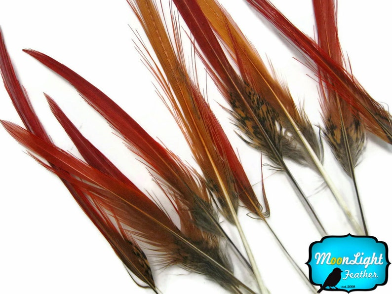 """8-10/"""" Golden Pheasant Red Tips Loose Feathers 10 Pieces"""