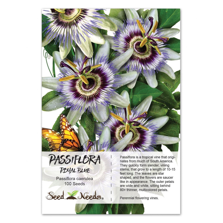 Passion Flower Seeds Royal Blue Passiflora Caerulea Open Etsy