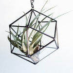 Repurposed  Glass Cube Octahedron Hanging Planter - Stained Glass Terrarium