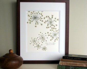 Pressed flower print, 11x14 double matted, Queen Anne's Lace wildflowers botanical, wall decor no. 0014