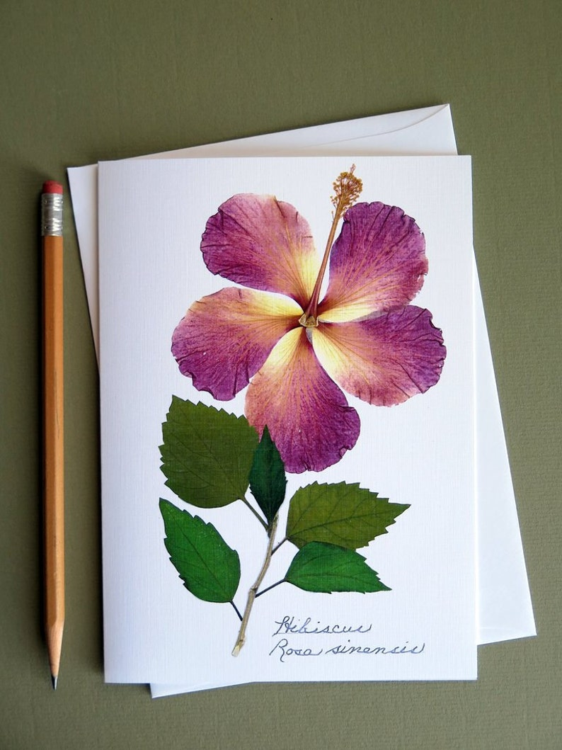 pressed flower greeting card hibiscus flower card no1202