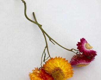 Dried Flower Stems Etsy
