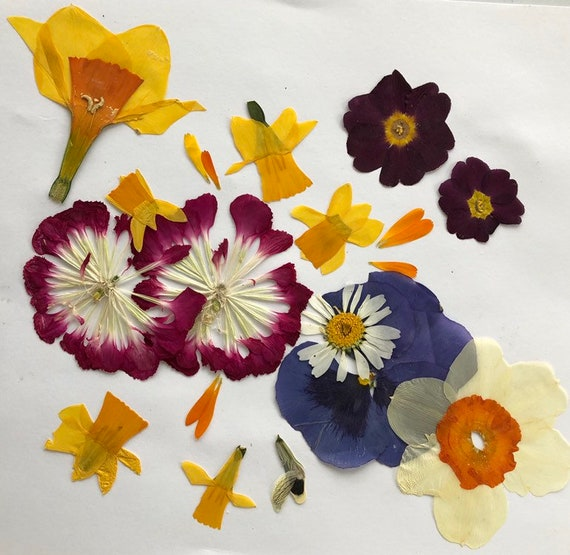 Pressed Flowers Dried Leaves And Flowers Real Flowers Table Etsy
