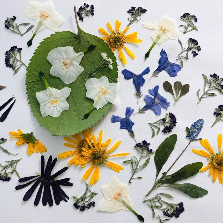 Pressed Wedding Flowers: Pressed Flowers Real Dried Flowers Decorations Wedding