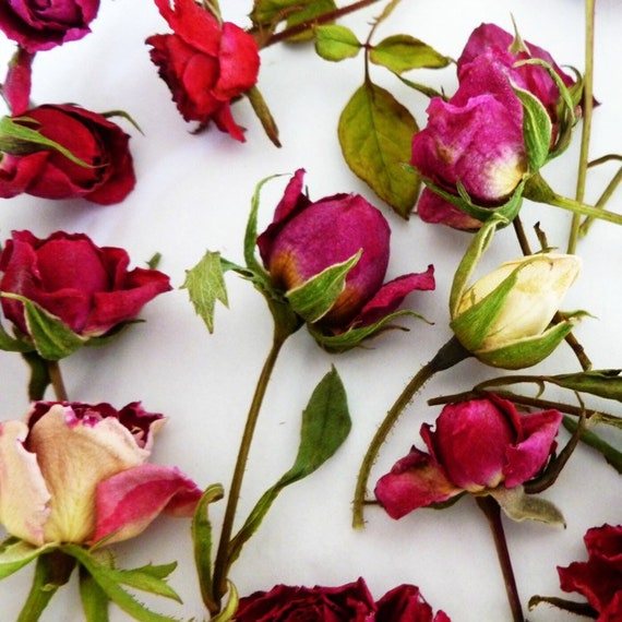 Dried rosebuds pink red yellow wedding decorations craft etsy image 0 mightylinksfo