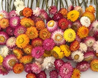 160 Dried Flower Stems, Bud Vase Flowers, Hair Wreath Flowers, Floral Wedding Decoration, Biodegradable, Wildflower Stems, Dry Strawflowers