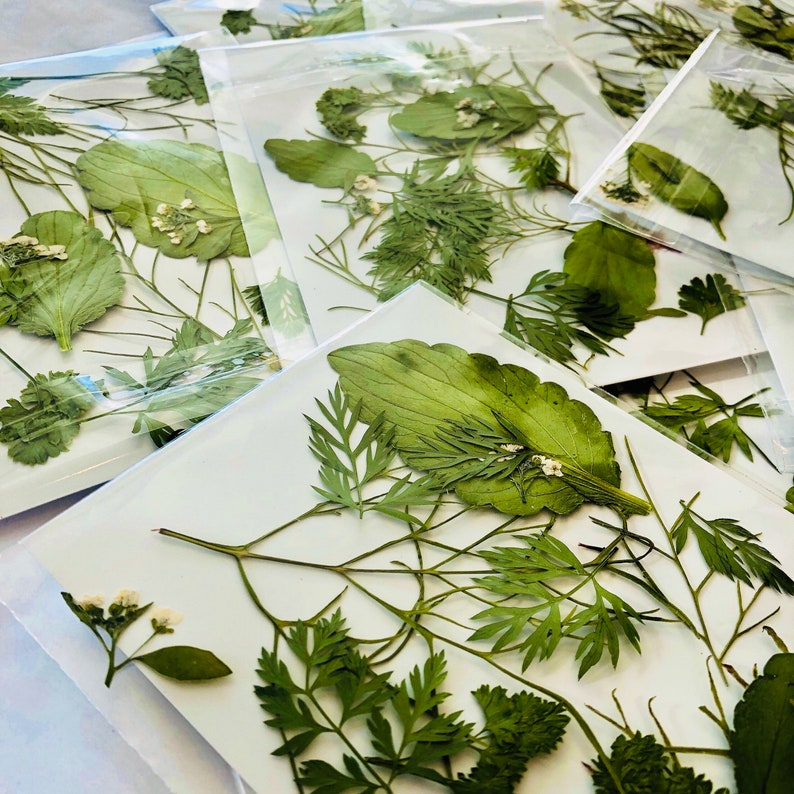 Pressed and LeavesFlowers Real Dried Flowers Decorations 30 pressed leaves