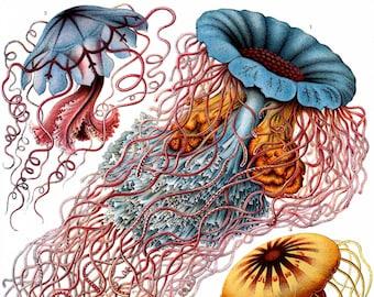 Disco Medusa Jelly Fish Blank Note Card Handmade Nature