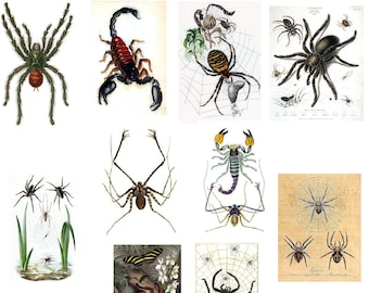 Arachnid  Collection Number 1  blank Cards Handmade Blank Note Cards Creepy Crawly
