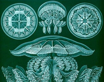 Disco Medusa 4 Jelly Fish Blank Note Card Handmade Nature