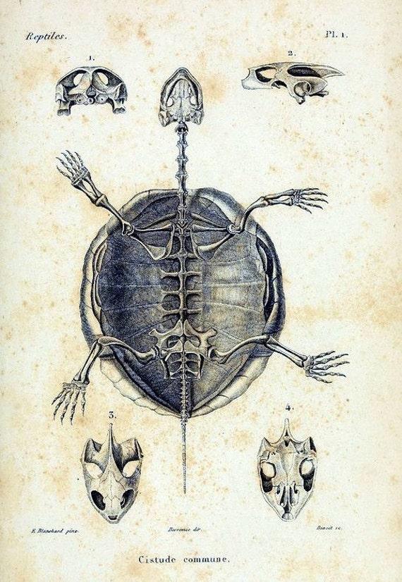 Schildkröte Skelett 2 Notecard Halloween handgefertigte