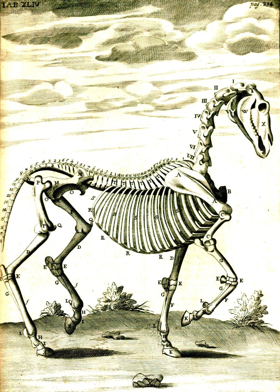 horse skeleton blank notecard halloween handmade vintage image | etsy