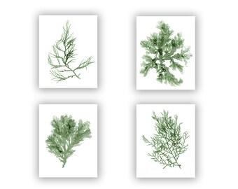 Seaweed Print Moss Green Wall Decor, Beach House Art Set, Natural, Light Green, Coastal Decor, Coastal Wall Art