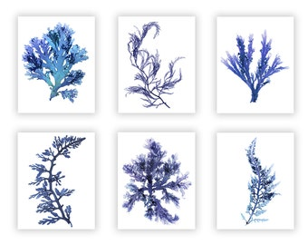Beach House Wall Art, Seaweed Botanical Print Set, Blue Nautical Decor, Coastal Themed Decor
