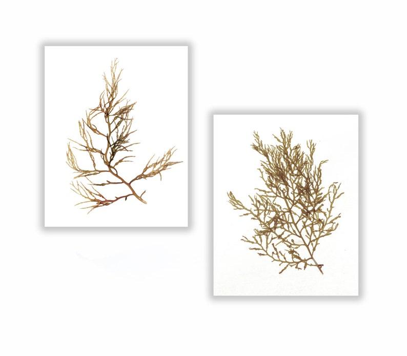 Seaweed Botanical Print Set Natural Neutral Brown Beige image 0